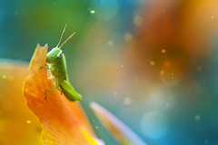 (twomeows (away...)) Tags: world flower macro canon insect lights evening close bokeh small dream snail 100mm 50d