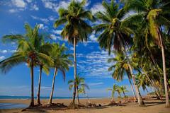 A Paradise of the tropics. (Joe Dsilva) Tags: costa beach costarica grove coconut playa rica tropical tropicalbeach uvita costaricabeach playauvita uvitabeach coconutgrovebeach