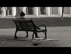 the lover is late (Eneade) Tags: france girl canon bench eos solitude pigeon candid date lover chambry parc streetshot 600d eneade