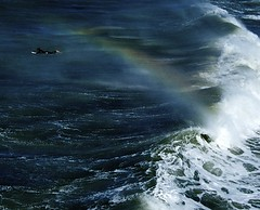 surf rainbow (matthew Hunter 955) Tags: ocean sea newzealand christchurch water rainbow nikon surf waves surfer sigma wideangle canterbury surfing nz newbrighton d60 sigma1020mm nikond60