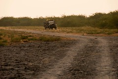 Little rann of kutch safari (Sapna Kapoor) Tags: india nature safari gujrat kutch rann littlerann