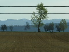a slice of life.. (mags_Tag) Tags: tree field farm wires crops baum slices acreage