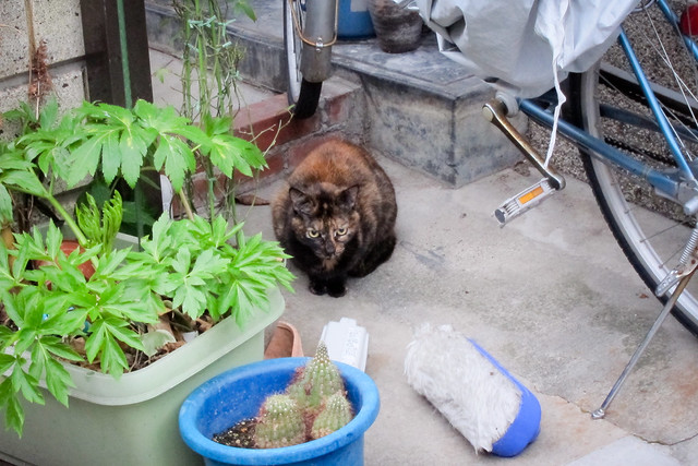Today's Cat@2012-03-01