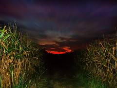 CIMG8575 sometimes I wonder where will I roam... (pinktigger) Tags: sunset italy field cornfield italia country countrylane friuli fagagna feagne