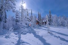 Sous la lune (Tonton Dave) Tags: snow night forest finland landscape lapland chalet moonlight neige paysage nuit forêt mökki clairdelune akäskero