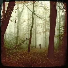 I still miss someone (biancavanderwerf) Tags: trees mist forest walking square landscape person nevel bianca dreamcatcher landschap iphone