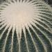 Cactus @ US Botanical Gardens
