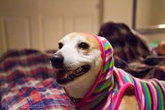 dog smile happy hoodie plaid bedsheets