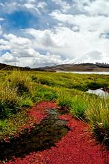 Lago Chungara (Tom[le]Chat) Tags: chile santiago luz night de sand san chili desert pedro atacama valledelaluna vapor arica antofagasta geysers sandboard portara
