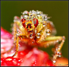 Insect and drops