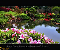 JU RAKU EN       (Japanese Gardens)  Explored (southern_skies) Tags: flowers spring australia queensland japanesegardens toowoomba