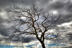 (roberto 78) Tags: canon albero inverno pioggia hdr temporale dblringexcellence tplringexcellence