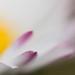 """Ce doux soleil qui vient te caresser le visage tel un pétale • <a style=""""font-size:0.8em;"""" href=""""http://www.flickr.com/photos/53131727@N04/13544710355/"""" target=""""_blank"""">View on Flickr</a>"""