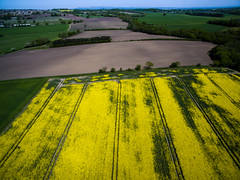 Yellow (sammys gallery) Tags: england yellow unitedkingdom farm sthelens billinge carrmilldam