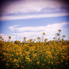 084.2016 (Francisco (PortoPortugal)) Tags: flowers sky flores primavera portugal clouds square spring cu porto nuvens quadrada franciscooliveira portografiaassociaofotogrficadoporto 0842016 20160319fpbo2743