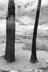 Dead California (autobahn66.com) Tags: california blackandwhite abandoned desert surreal palmtrees deserted saltonsea