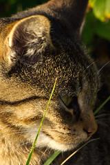 IMG_6031 (Lightcatcher66) Tags: florafauna makros katzencats lightcatcher66