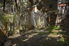 Houseplant (jgurbisz) Tags: abandoned newjersey industrial decay nj vegetation vacantnewjerseycom nationallead jgurbisz