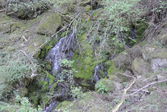April Bicycle Camping day 4 - a little waterfall (Spiral Cage) Tags: april wa pugetsound orcasisland sanjuanislands anacortes bicycletouring springtour eastsound moranstatepark mountconstitution fidalgoisland bicyclecamping cyclotouring aprilbicyclecamping aprilbicyclecampingday4