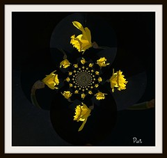 Pour Claudy (patrick.verstappen) Tags: inspiration flower digital painting photo google flickr pat daffodil facebook picassa paintnet gingelom ipernity d7100 pinterest ipiccy picmonkey
