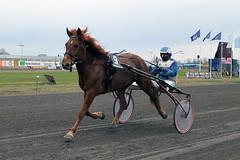 IMG_2361 (lovelymelancholy) Tags: horses horse hevoset hevonen horseraces ravit imrautio ravihevonen oulunravirata