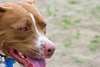 16-05-15_untitled_601 (Daniel.Lange) Tags: dog philadelphia dogs dogdayafternoon spado columbussquarepark