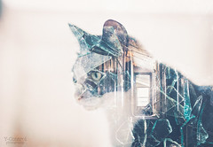 Broken (Y-Control Photography) Tags: old ireland portrait colour building abandoned broken window glass cat photoshop canon kitten feline exposure pretty experimental fort doubleexposure double warehouse multiple alternative dunree 60d vsco ycontrolphotography