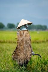 Farmer (Nguyễn Đình Thành) Tags: rice harvest farmer raincoat vietnamcountryside