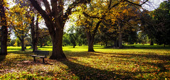 you're entitled to rest, so don't worry about what others do. (Bec .) Tags: bec canon 80d adelaide southaustralia botanicgardens trees autumn leaves seat bench shadow youreentitledtorestsodontworryaboutwhatothersdo 18135mm he boopboopboop