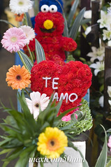 "Te amo • <a style=""font-size:0.8em;"" href=""https://www.flickr.com/photos/7515640@N06/6785342504/"" target=""_blank"">View on Flickr</a>"