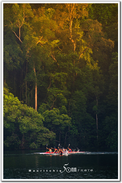 macritchie reservoir - singapore  - canoeing