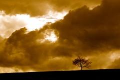 A Perfect Storm (annicariad) Tags: sky tree wales clouds cymru stormy drama annicariad
