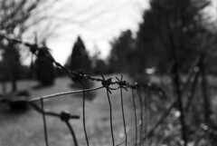 Barbed Wire (Iseth) Tags: bw fence dof bokeh trix arboretum madison barbedwire barbs barbed 50mmf14 nikomat shallowdof blackandwhitefilm nikomatftn fenceh