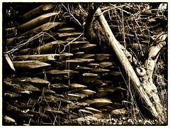 Wengertpfahl I vinyard posts (olipennell) Tags: tree pen germany olympus poles baum pfosten weinstadt badenwurttemberg epl3