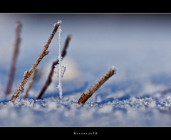 Little sparkle world, on ice #2 (Borretje76) Tags: macro netherlands iso100 crystals crystal sony sneeuw natuur sigma glimmen enschede kristal ijs f63 koud 180mm glinstering meertje glinster takje glinsteren freesing twijgje kristallen gupr borretje76 dslra580 bevrored