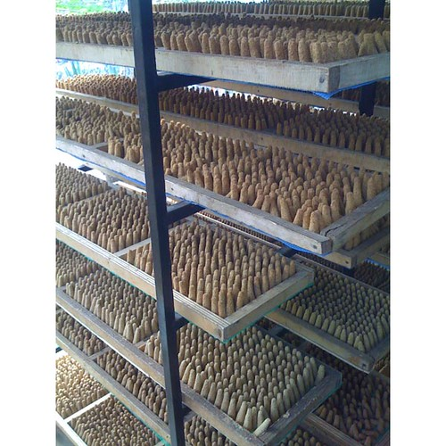 palosanto incense cones drying (2)