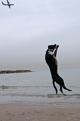 Hey up there, wait for me ! (Poupetta) Tags: airplane jumpingforjoy dogonthebeach themediterraneansea