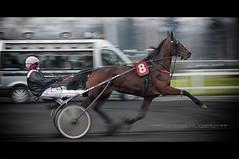 Hippodrome de Vincennes (Paul Rodrigues Photographies -OFF-) Tags: horse paris france race cheval nikon course panning chevaux fil d90 hippodromedevincennes trotattel paulrodriguesphotographies