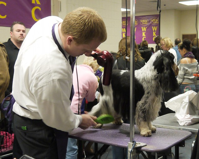 Westminster DOG SHOW_33