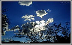 Cu Azul   <<<>>>  Blue Sky (Opimentas) Tags: blue trees light sunset brazil sky cloud sun sunlight tree luz sol nature azul brasil angel clouds landscape flickr photos tag natureza go tags paisagem cu prdosol nuvens wikipedia february arvore arvores nuvem abs ops fevereiro gois entardecer pimenta wikimedia onofre cuazul gyn luzdosol 2013 wikipdia onofrepimenta wikimdia opimentas oltusfotos bhto gonia february2013 fevereiro2013