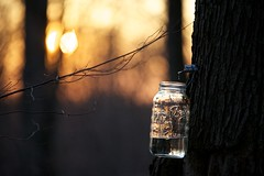 Sugaring Season 2012 (Chiot's Run) Tags: sunset cooking fire maple dusk jar glassjar maplesugaring