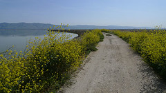 A bit north of Alviso (What Photos Look Like) Tags: california leica bike lumix sanjose wideangle panasonic bayarea santaclara alviso bjorke 169 2012 photorantcom kevinbjorke botzillacom lx3 24mmequiv dmclx3