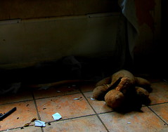 Alone (Dirk Lambrichts) Tags: abandoned broken beer canon eos hug doll alone village ghost hond pop teddybear rubbish oud urbex scherven doel scherf ghostvillage knuffel knuffelbeer verlaten vervallen 60d