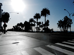 Where the Concrete Ends and the Water Begins (TheJudge310) Tags: california road street sun streetlight december bright santamonica palmtrees santamonicablvd 2011 nikoncoolpixp500