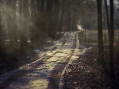 Daybreak (macfred64) Tags: winter snow blur home blurry woods dof path earlymorning sunbeam textured homeland caminho daybreak vintagetones magicunicornverybest magicunicornmasterpiece