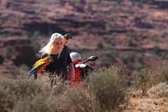 (Kai Bey) Tags: parrot macaw fishertowers freeflight freestyleflyers