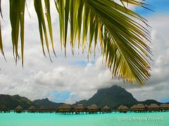 Bora Bora 2008 (firefly242) Tags: ocean beach polynesia islands paradise lagoon palmtrees exotic southpacific beaches tropicalislands tahiti villas tropics borabora bungalows oceania tropicalparadise frenchpolynesia societyislands overwaterbungalows exoticvacation tropicallagoon whitesandbeaches southseaislands exoticholiday tropicalresorts overwatervillas