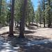 Whitetail Campground #3