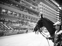 horses (Fion N.) Tags: life city people urban blackandwhite bw hongkong living    hongkongisland  happyvalleyracecourse gf1    panasoniclumixgf1