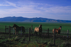 "Horses in Sierra Valley • <a style=""font-size:0.8em;"" href=""http://www.flickr.com/photos/65461142@N04/6967459939/"" target=""_blank"">View on Flickr</a>"